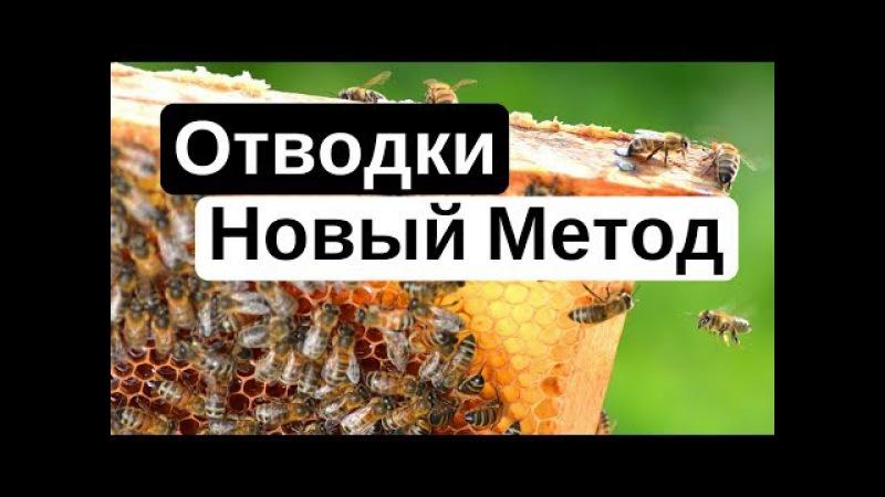 Пасека 18 Как сделать отводок пчел (Пчеловодство) - новое Пчелиный эксперимент 2 ( Новый Метод )
