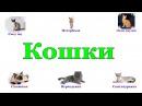 Презентация для детей Кошки (методика Домана)