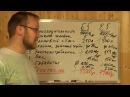 Сравнение Биодека 5 и Евробион 5 Коловеси 5