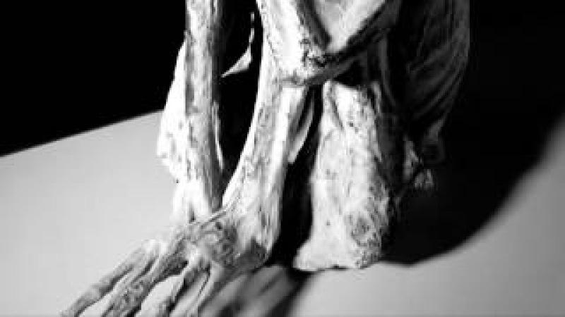 Las Momias de Nazca Capitulo 3 con Jaime Maussan Resumen A partir del 16 de Julio