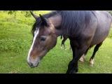 BoJack Horseman в Калуге