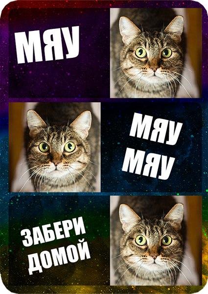 #NMK_отдам #NMK_животныеОтдам кошку. Фиалка. 5 лет. Кисоньку выброс