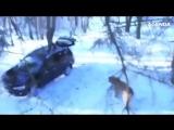Обычный момент в России. Когда забыл покормить с утра своего медведя...