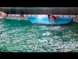 Шоу в Санкт-Петербургском дельфинарии на Крестовском ч 2