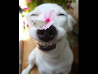 Hundi mit Schmetterling