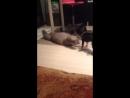 Когда ты кот а кто то другой собака а хозяин смотрит мультик том и джерри😳