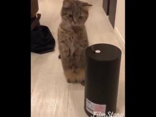 Купили увлажнитель воздуха...кота не слышно третий час))))
