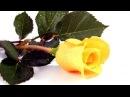 Сорвали розу исп. Тамара Козлова
