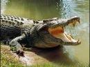 Самые опасные животные в мире. Крокодилы. Африка. Ночные охотники. Nat Geo Wild.