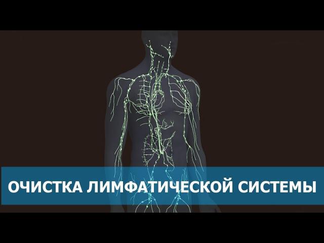 Лимфатическая система. Как очистить лимфу? [Перископ]. Арсен Маркарян