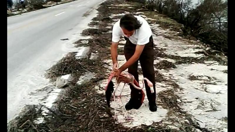 ..попытка спасти выжившего после урагана Ирма на Кубе.....пастор Батиста Вальдес
