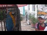 MVI_0799 Я и оручий попугай из ялтинского зоопарка