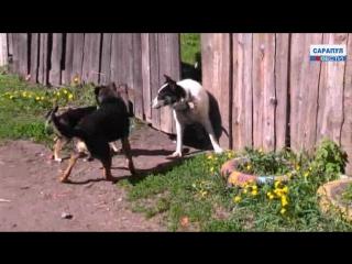 Месячник по профилактике бешенства животных в Сарапуле