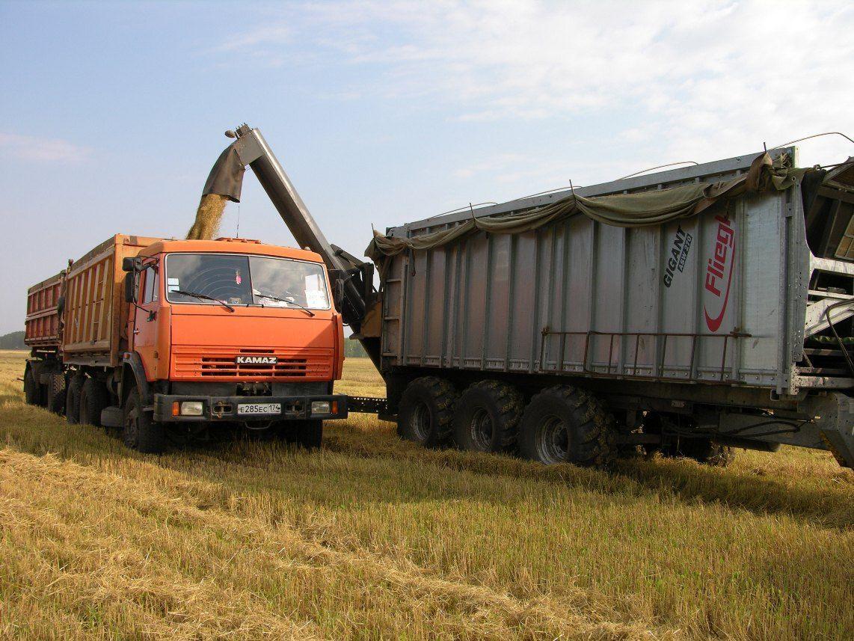Челябинская область собрала рекордный урожай пшеницы