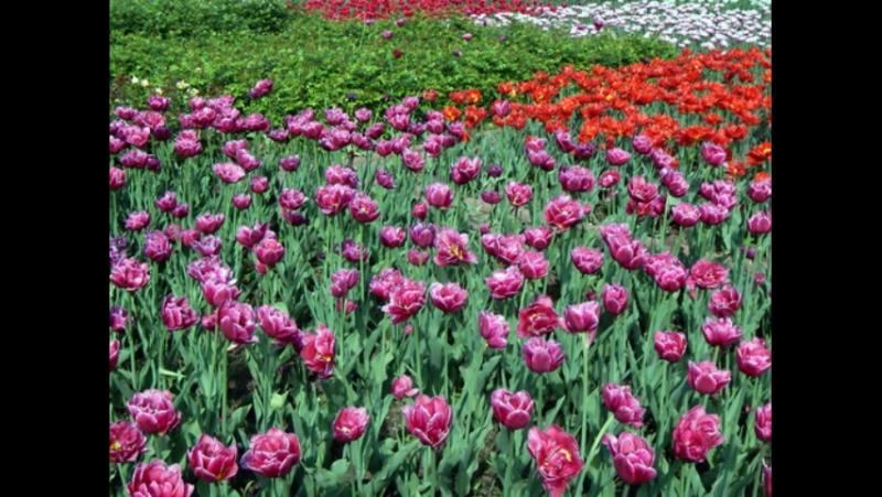 Александровский сад в мае...