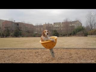 Instagram недели. Собака-путешественница