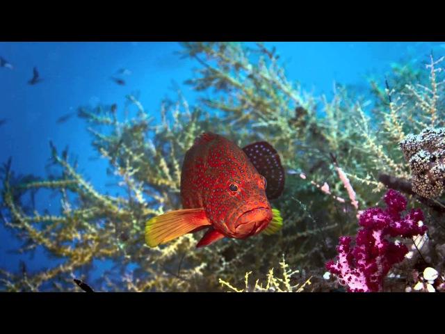 Cosmonova: En resa bland korallreven