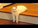 Приколы с Котами - Смешные кошки приколы про кошек и котов 2017