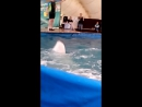 дельфинчики красавцы