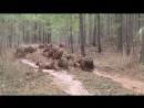 U.S. Army · The ghillie suit wash!
