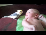 Попугай поет малышу. Так мило!