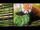Red Panda Pastel Drawing
