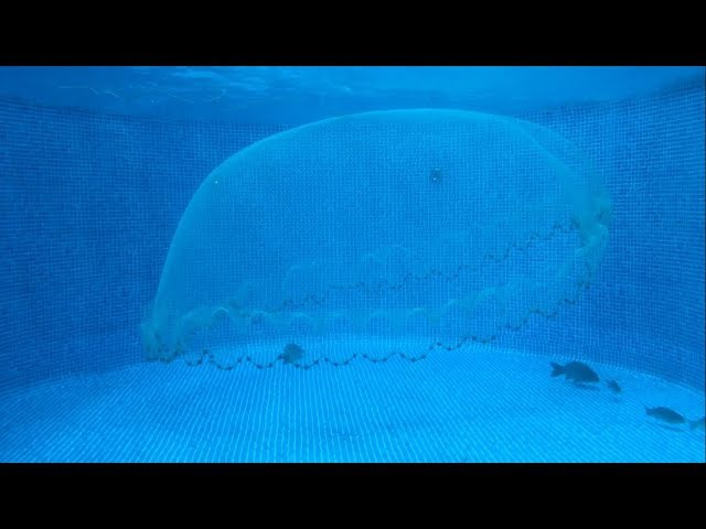 Принцип работы кастинговой сети под водой. Подводные Съемки.