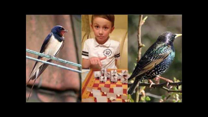 Юный зоолог Гриша, 7 лет. Покормите птиц зимой! Рассказ про перелетных и зимующих ...