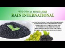 Вся правда о компании Rain International (Рейн Интернешнл)