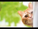Смешные коты и кошки новые приколы с котами и животными