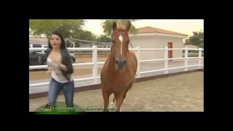 Ali Al Ameri, Haifa Wahby Interview