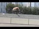 INSTABLAST! - Skater Car Hitting Same GAP!! Full Pipe Loop!! No Comply Bs 5-0 Handrail!!