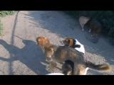 Мимимишное видео Маргоши и Малыша,Love story в приюте