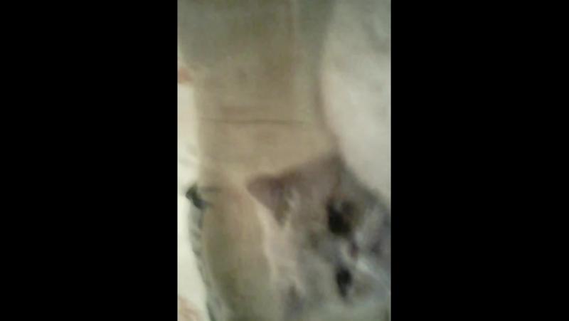 Мой любимый котик Федя