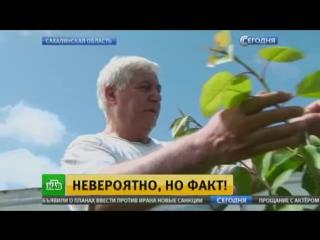 Сахалинское чудо Фамиля Мамедова.