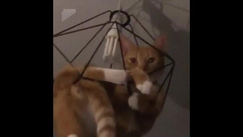 Когда я думаю, что мой кот уже столько всякой дичи повытворял, и вряд ли сможет меня чем-либо удивить, происходит что-то вроде т
