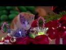 Event котики готовятся к новогодним корпоративам 2017