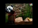 ВИПО ПУТЕШЕСТВЕННИК 24 СЕРИЯ Китай Испытание ниндзя