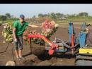 Выкопка гортензий из грунта (питомник Ёлы-палы, сентябрь 2017)