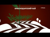 Краснодарский чай Команда Форс-Мажор