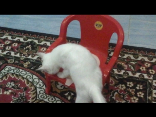 Умный кот?? video by Luda?