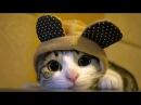 Забавные собачки и котики - Эти милашки поднимут Вам настроение