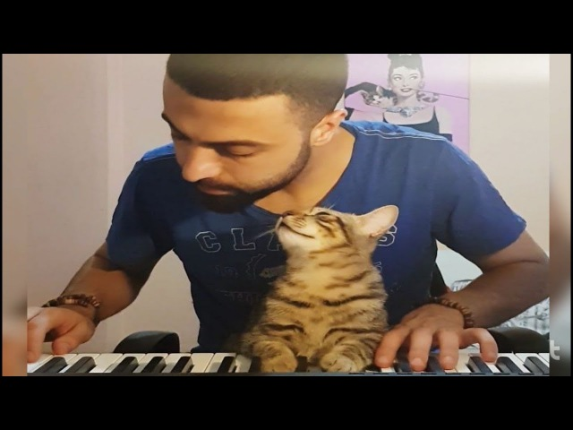 THIS IS SO BEAUTIFUL!! PLAYING PIANO WITH CATS!