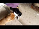 Смешные видео про котов и собак.Собака против кота.