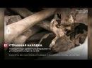 Мешки с фрагментами человеческих костей обнаружены в Старом городе Вильнюса
