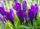 Полевые цветы - Автор Лидия Любомирская, Исполнитель Любава