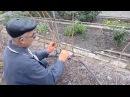 Обрезка кустов винограда с рукавами расположенными со смещением зоны плодоношения