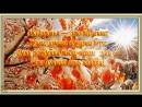 С Днем рождения в ноябре Красивое поздравление Видео открытка