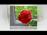 ФЕН-ШУЙ комнатных растений. Советы профессионалов