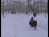зима Черноземья 21.02.2010